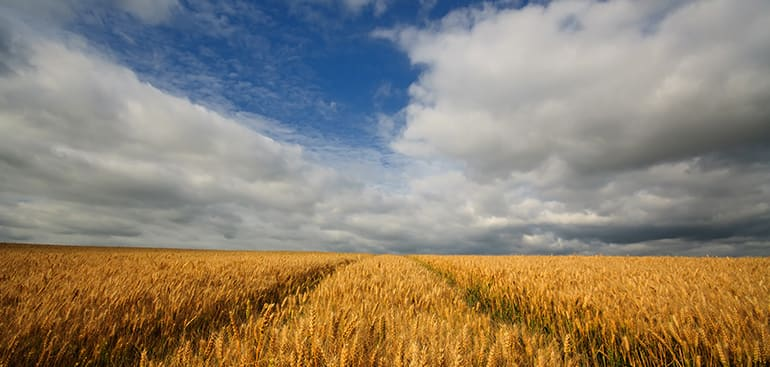 public://media/Article Thumbnail Images/Article Stock Images/Industry - Agriculture/field_of_corn.jpg