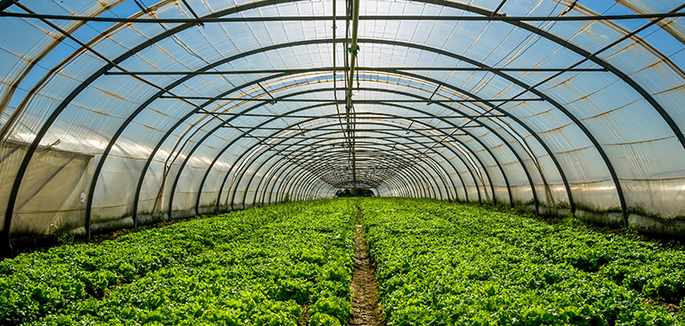 public://media/Article Thumbnail Images/Article Stock Images/Industry - Agriculture/plant_nursery.jpg