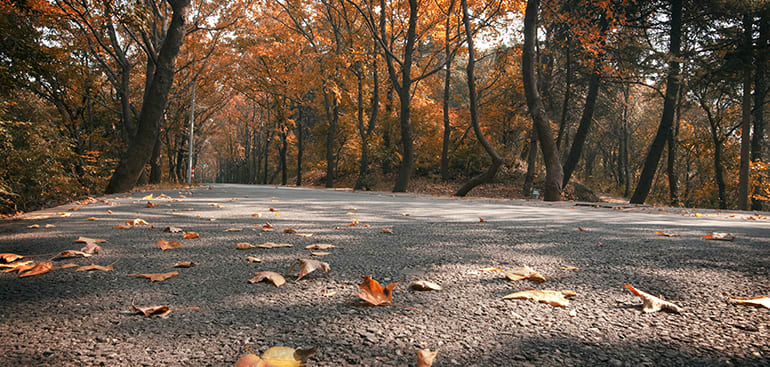 public://media/Article Thumbnail Images/Article Stock Images/People and Landscapes/autumn_road.jpg
