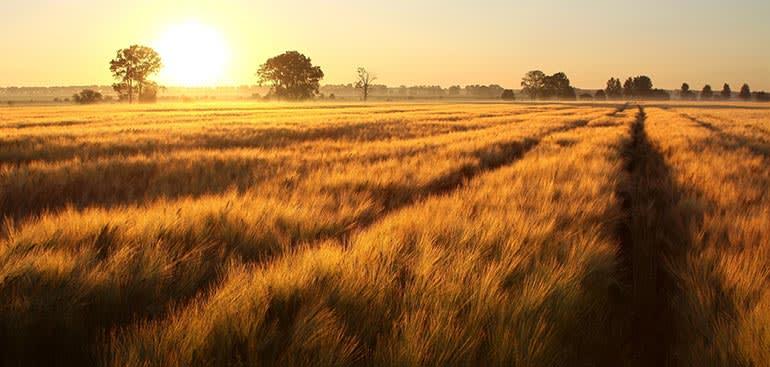 public://media/stock-images/other/agriculturefarming/farm-sunset.jpg