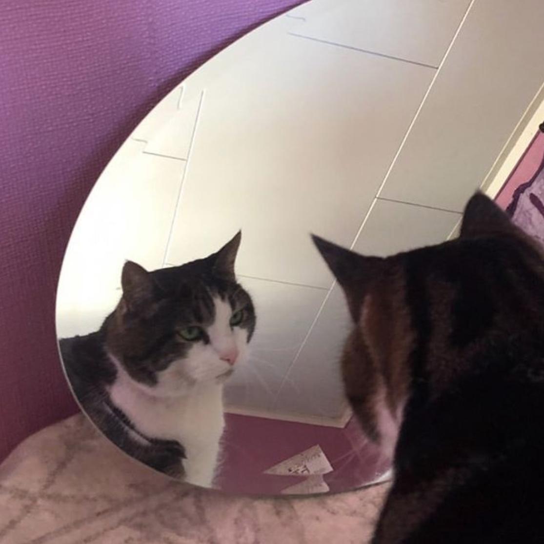 Katt som ser seg i speilet