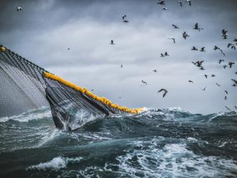 fiske og fangst