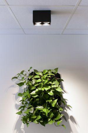 Gecko dobbel downlight