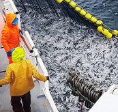 Fisk i nota