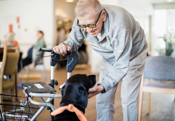 En eldre mann hilser på besøkshunden ved Risenga Bo- og omsorgssenter, som drives av Stendi.