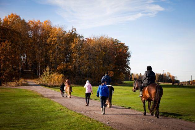 Flere barn lærer seg gårdsarbeid og hesteridning på Inn på tunet.