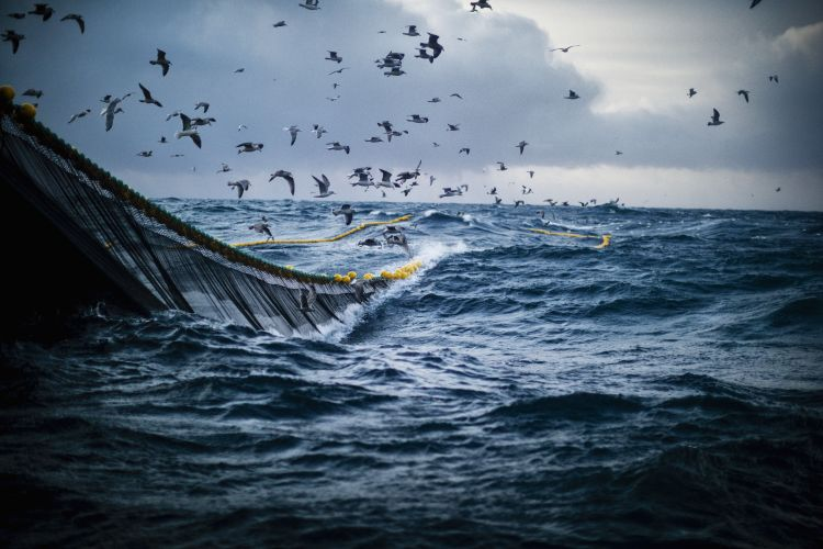 fiske og fangst fiskegarn