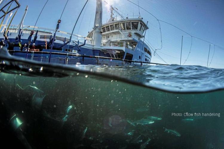 Blå brønnbåt og fisk under vann