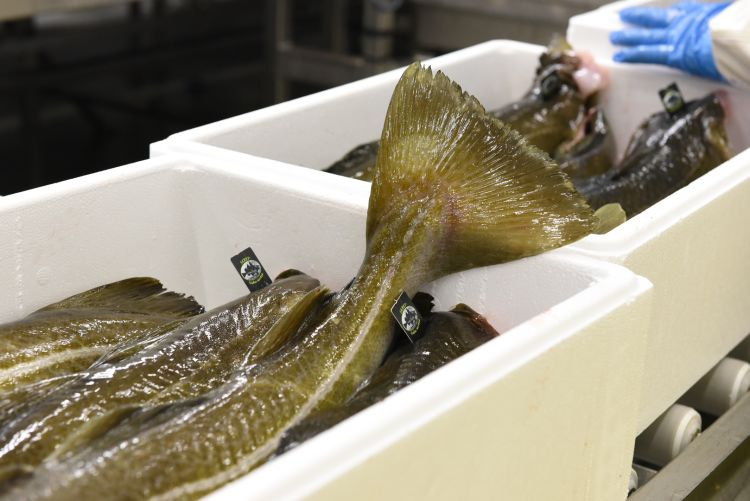 Slakteri fisk i kasser