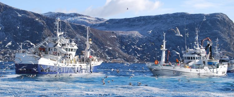 to blå fiskebåter på havet med fugler rundt