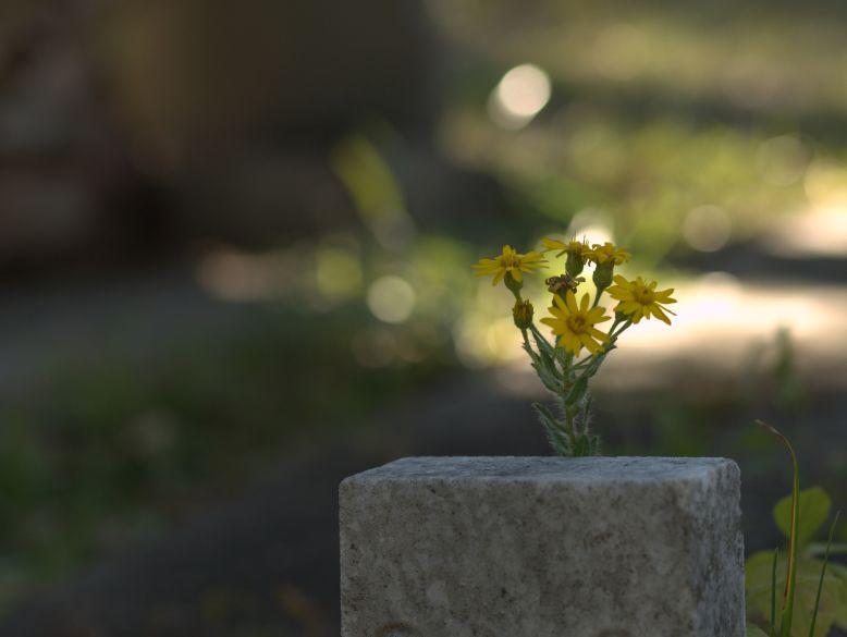 blomst på gravstein