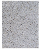 Exquisite Rugs Natural Hair On Hide 4059 Silver Area Rug