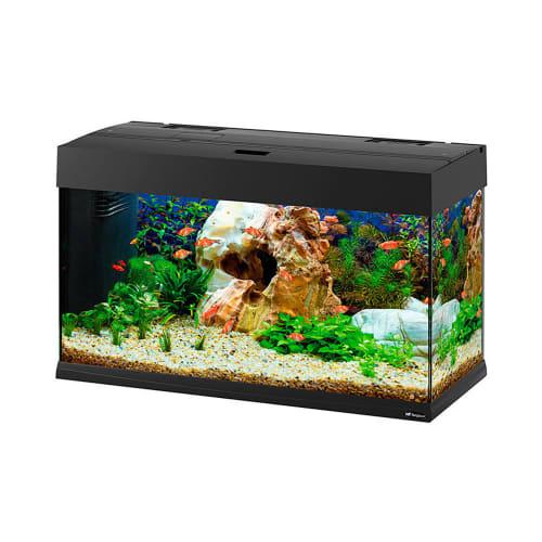 Jual Aquarium Kaca Perlengkapan Kolam Boyu Ruparupa