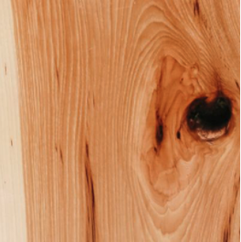 sample of hickory wood