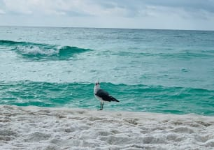 Fort Walton Beach Vacation Rental 7222