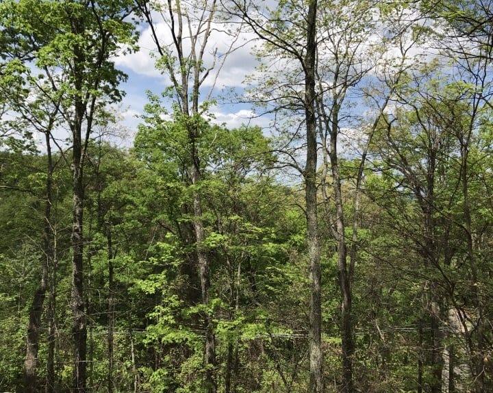 Cheyenne Ridge - Chalet Village | Gatlinburg, TN Cabin Rental