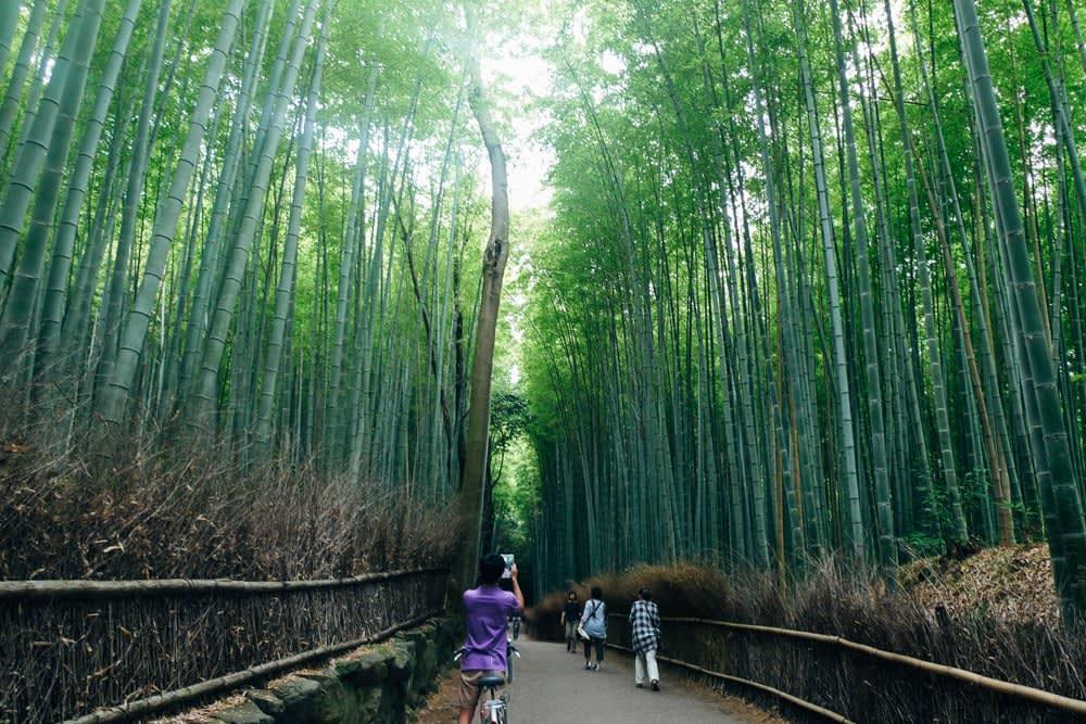 Bamboo forest at Arashiyama