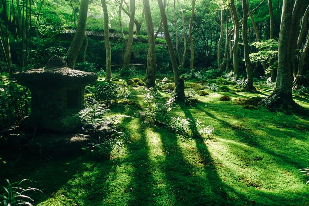 Moss garden - Gioji