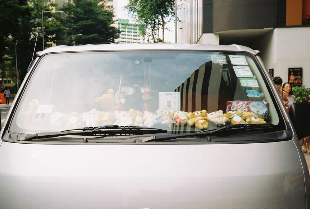 bears at car windows