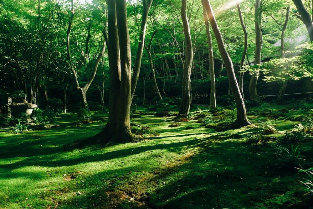 Arashiyama - A summer breeze