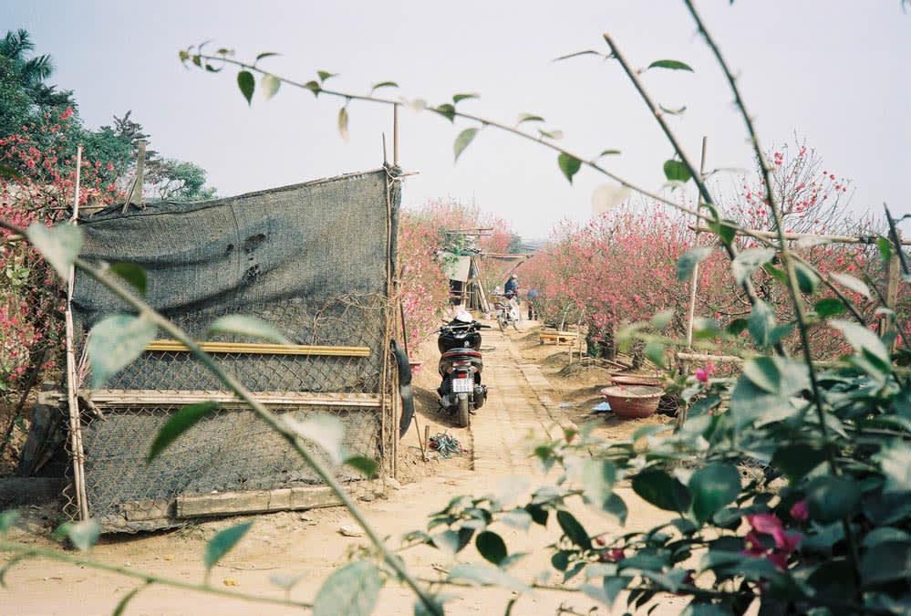 mototrbike at flower village