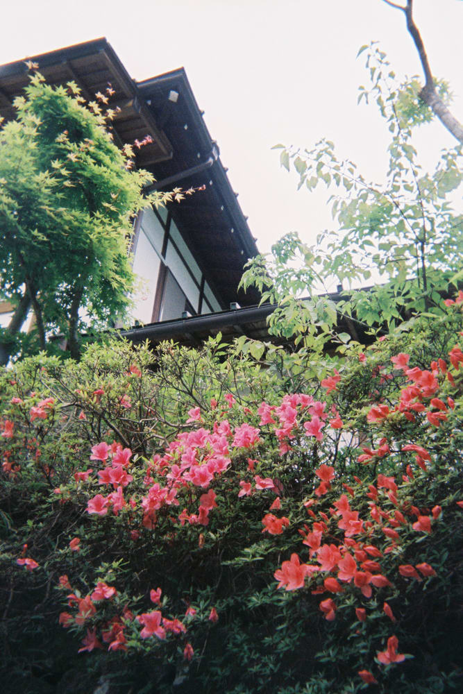 red flower japan