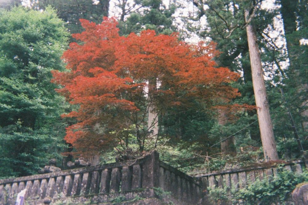 red leaves nikko