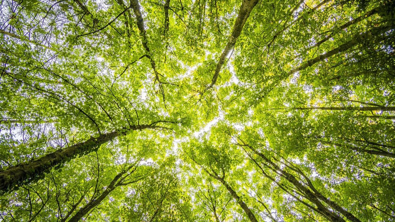 Ein natürlicher Wald, wie er sein sollte.
