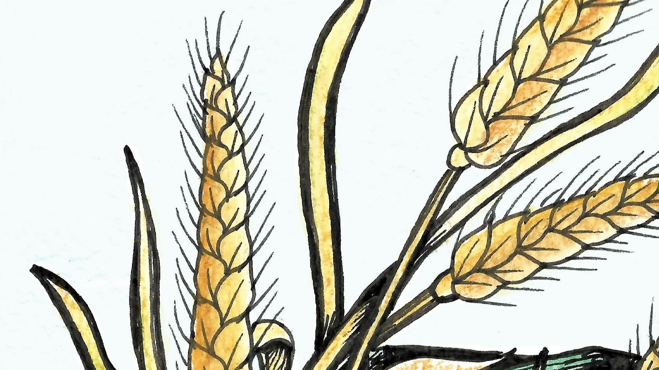 Es war eeinmal ein Weizenkorn mit großen Zukunftsplänen...