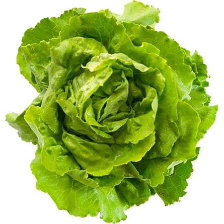 Kopfsalat ca. 1 Stück