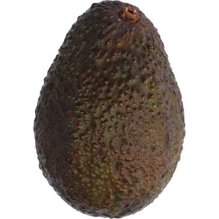 """Avocado Sorte """"Hass"""""""