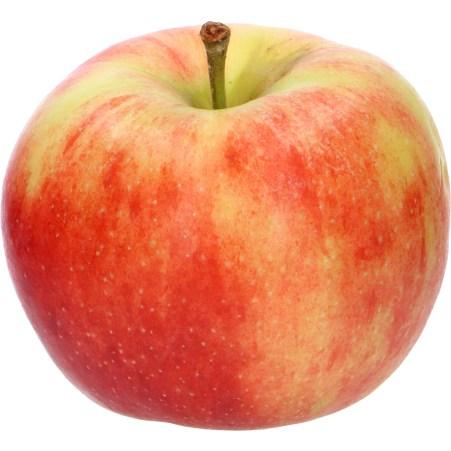 Elstar Apfel ca.1 Stück