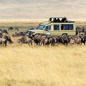 Tanzania safari's