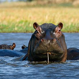 Zambia safari's