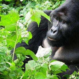 Oeganda safari's