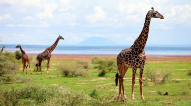 14-daagse safari Wildparken van Tanzania