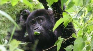 10 daagse luxe privé reis Rwanda