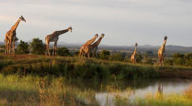 10-daagse avontuurlijke safari Ongerept Zuid-Tanzania
