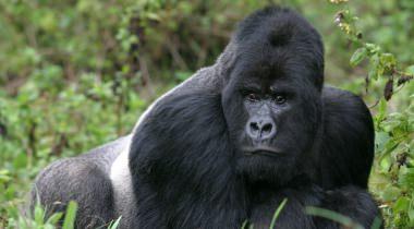 15 daagse budget privé reis 'Het mooiste van Oeganda!'