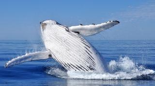 21 daagse walvis groepsreis Madagascar