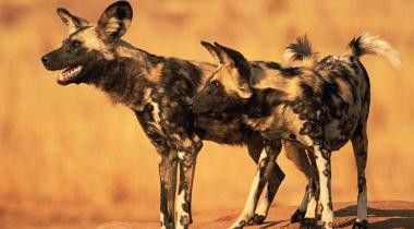 16 daagse groepsreis naar ongerept Zuid Tanzania