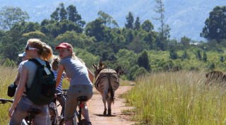 Familiereis Zuid-Afrika Op zoek naar de Big Five