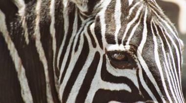 Familiereis Kenia, Tanzania en Zanzibar avontuur