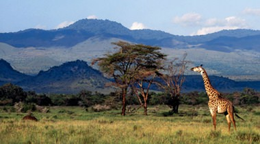 Best of Kenya