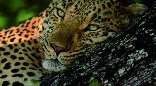 16-daagse rondreis 'Skitterend' Zuid-Afrika