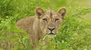25-daagse kampeersafari van Kenia tot Zuid-Afrika