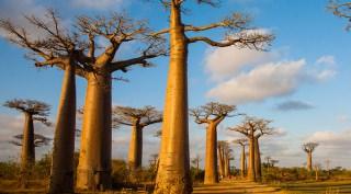 Madagaskar - Rondreis op maat