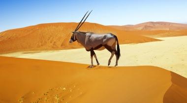 Namibië - Rondreis op maat