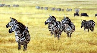 Tanzania - Safari op Maat