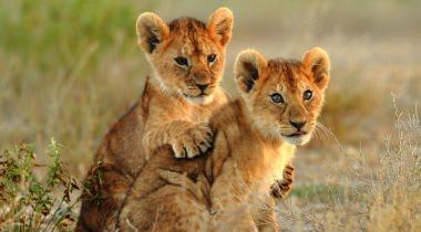 Tanzania - Familiereis
